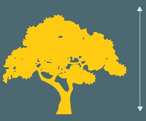 tree-img
